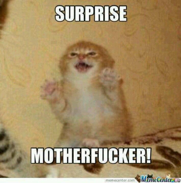 Miau!!!!