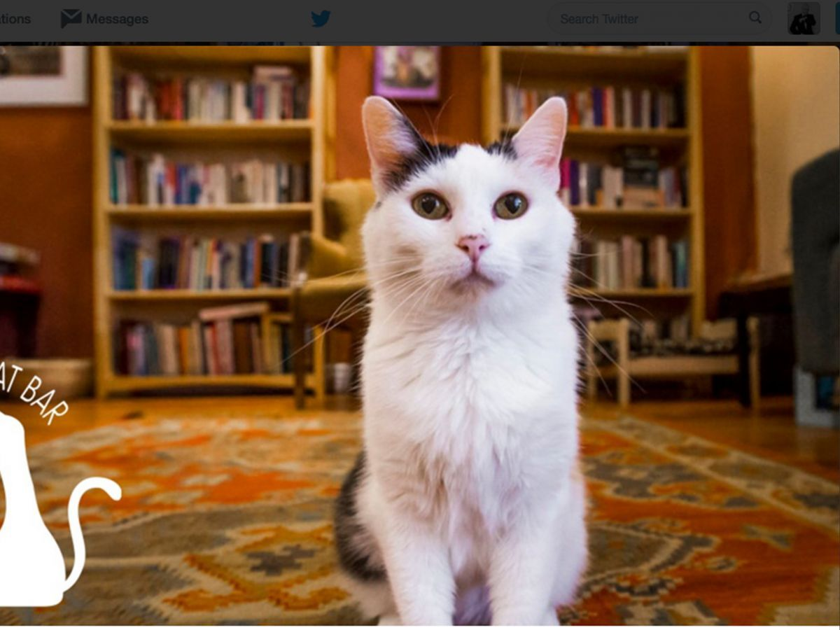 America's First Cat Bar Promises Wines & Felines Cat bar