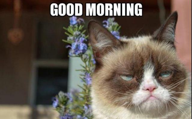 Good Morning Grumpy Cat Grumpy Cat Humor Cats