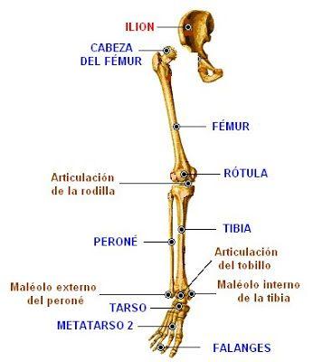 localización del dolor en la cintura pélvica