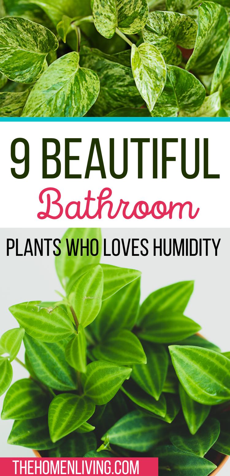 Photo of 9 Low Light Bathroom Plants that love humidity