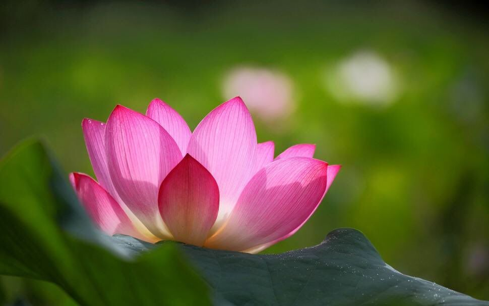 Love N Light On Happy Pinterest Flowers Lotus And Flower