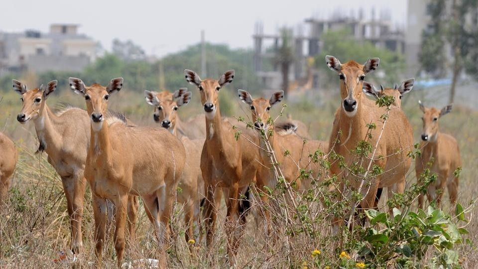 Pin by Lee Brown on Nilgai (With images) Pet holiday