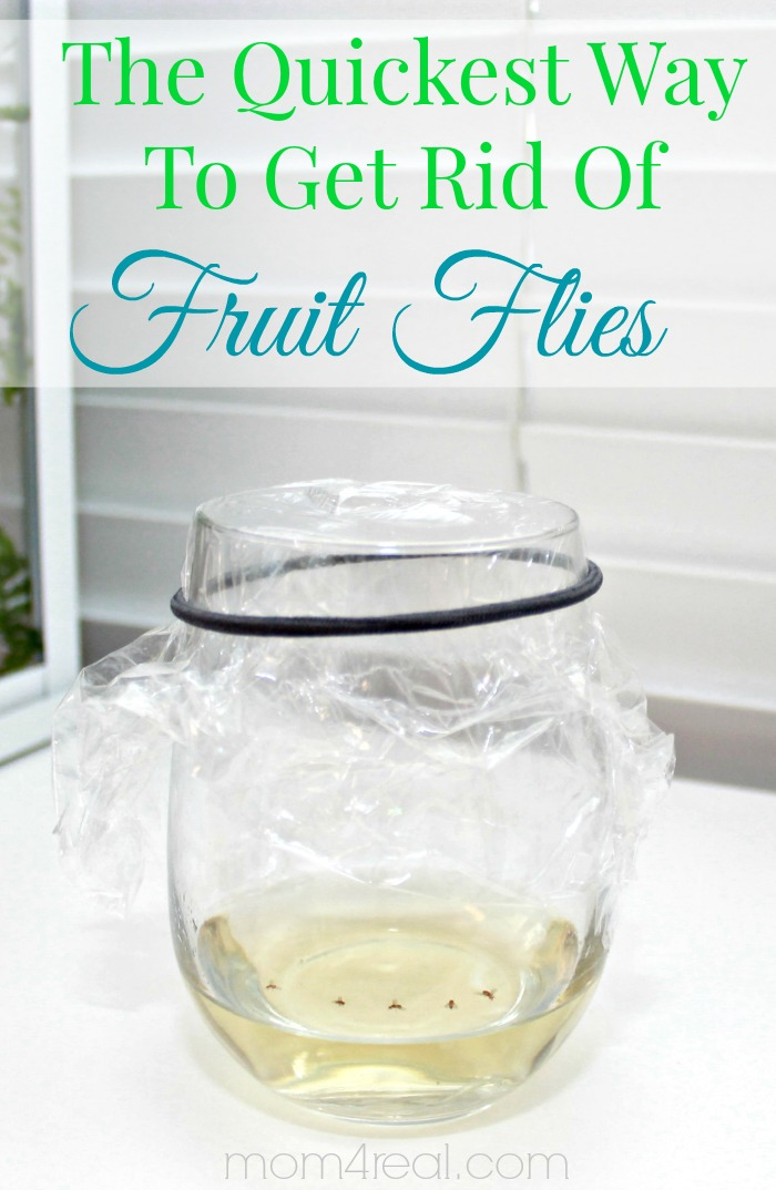 How To Get Rid of Fruit Flies or Gnats ~ Tip of the Day - Mom 4 Real -   18 how to get rid of gnats in the house ideas
