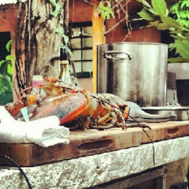 Cooking class featuring a 6 lb lobster, soon to be in my belly. Photo by mssharonmays • Instagram