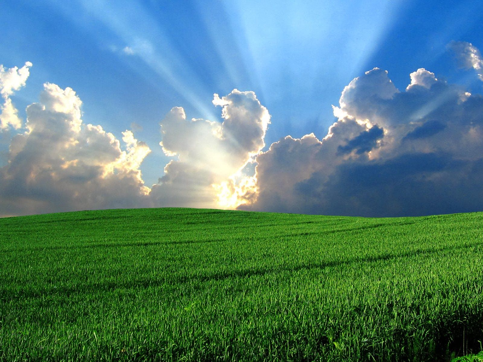 Windows Xp Bliss wallpaper free desktop backgrounds and