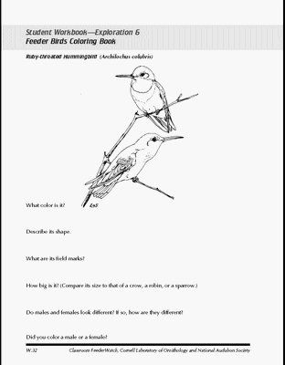 free printable realistic bird coloring pages birds of prey