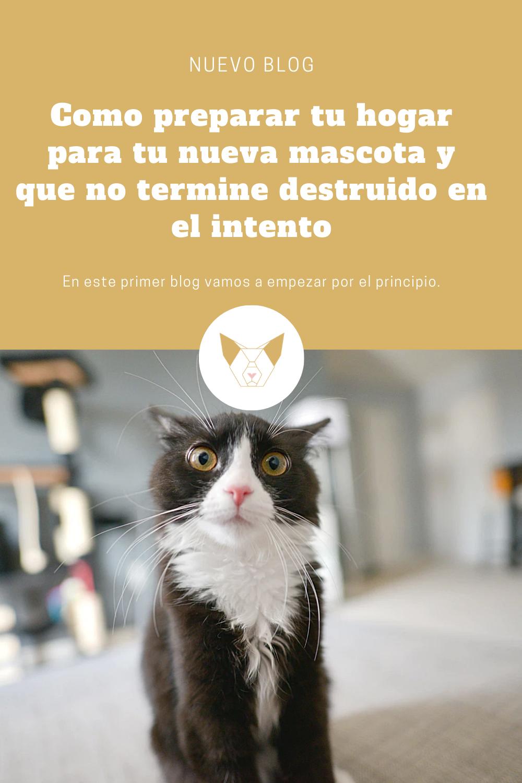 Como Preparar Tu Hogar Para Tu Nueva Mascota Mascotas Gatos Cosas Buenas De La Vida