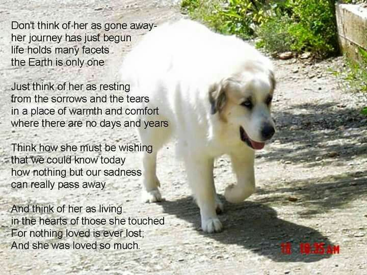 Beautiful. | Dog poems, Dogs, Dog passed away