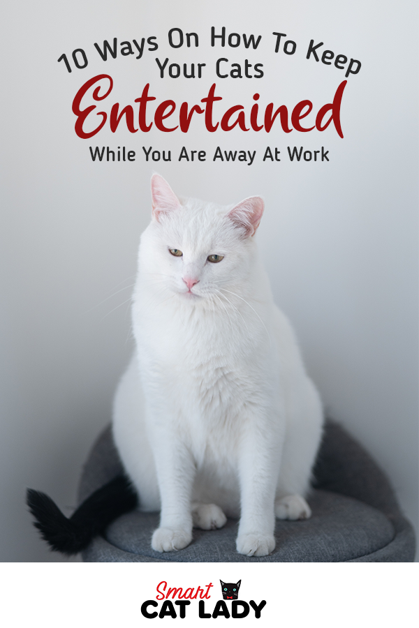 10 Ways On How To Keep Your Cats Entertained While You Are