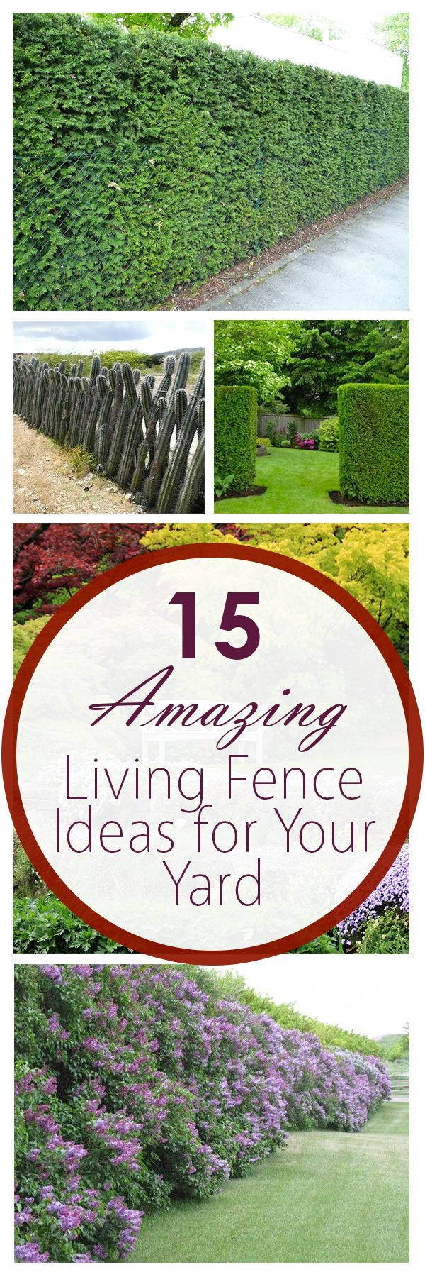 15 Amazing Living Fence Ideas for Your Yard Living fence