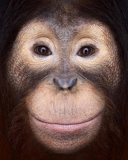 Incredible Studio Portraits Of Wild Animals By Brad Wilson: Brad Wilson's Stunning Animal Close-ups.See More Here
