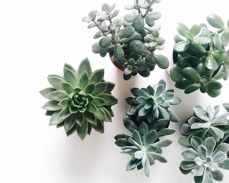 I N S T A G R A M EmilyMohsie Plants