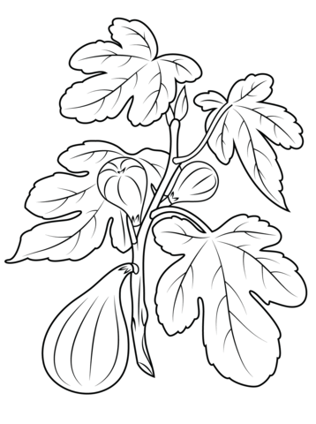 fig plant coloring page from figs category select from 26388 printable crafts of cartoons