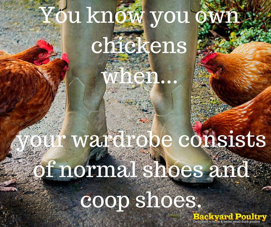 Backyard Poultry Magazine/quote...so true/ - Backyard Poultry Magazine/quote...so True/ Chicken Lover's Humor