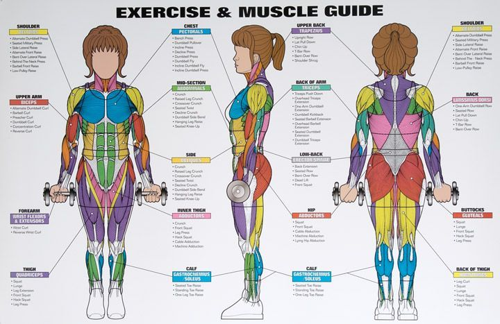 best exercises targeting each muscle group | muscle groups,