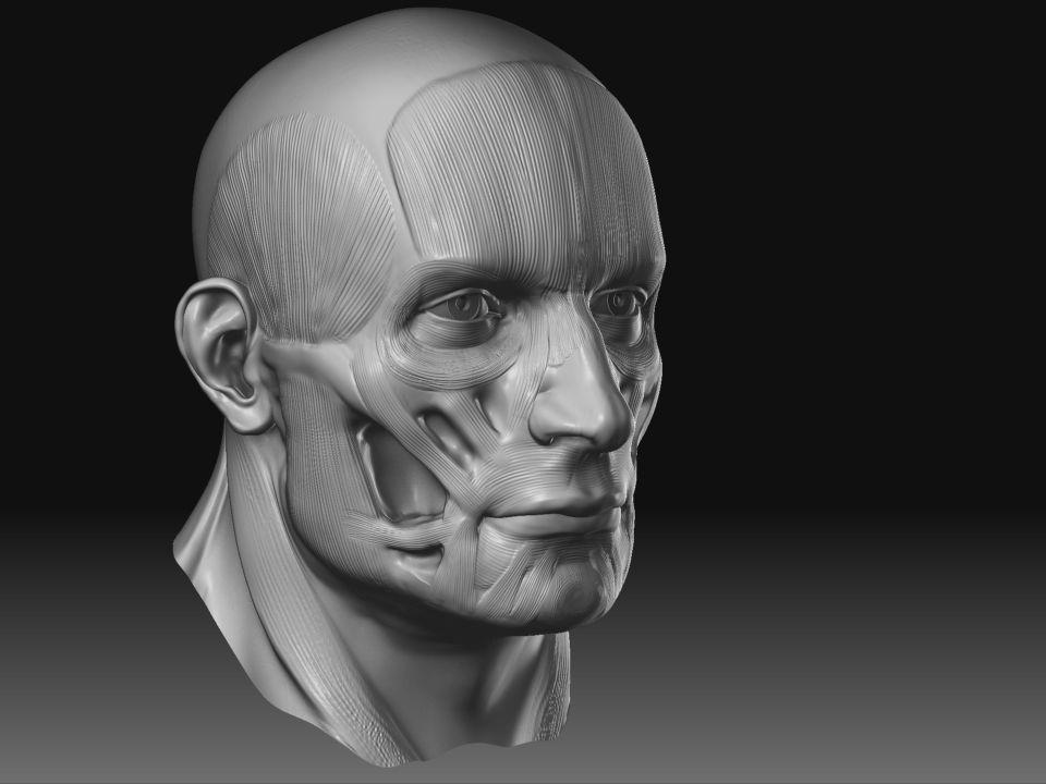 Zbrush Digital Sculpting Human Anatomy Book By Scott Spencer