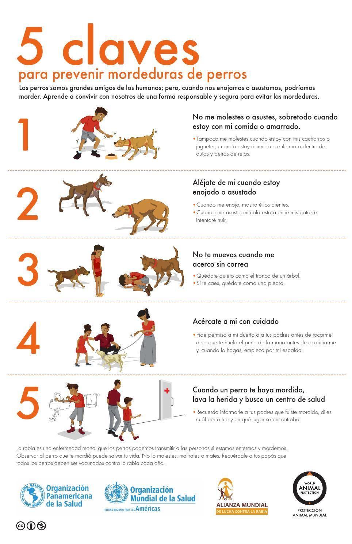 #ClippedOnIssuu from 5 claves para la prevención de mordeduras