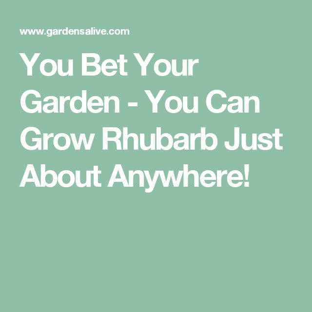 Rhubarb Companion Plants: You Can Grow Rhubarb Just About Anywhere!