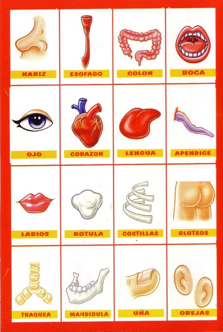 Partes del cuerpo humano | Vocabulario cuerpo humano | Pinterest ...