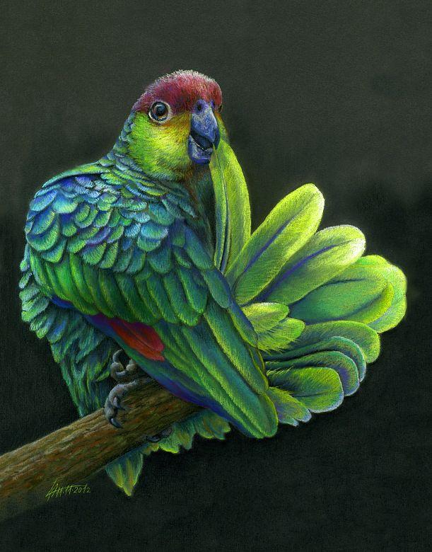 рисунок попугаев как живые какой-то момент