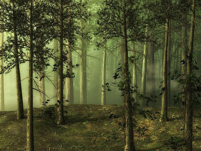 Forest Tree Landscape Forest Backdrops Black And White Landscape Fantasy Landscape