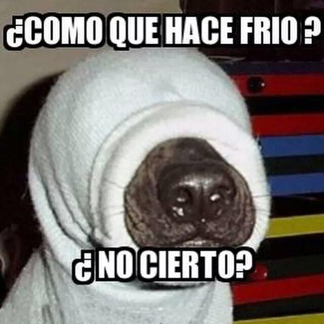 Como Que Hace Frio Nocierto Memesmexicanos Hace Frio Frio Mensajes De Humor