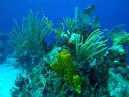 Resultado de imagen de Arrecifes de coral ,fauna