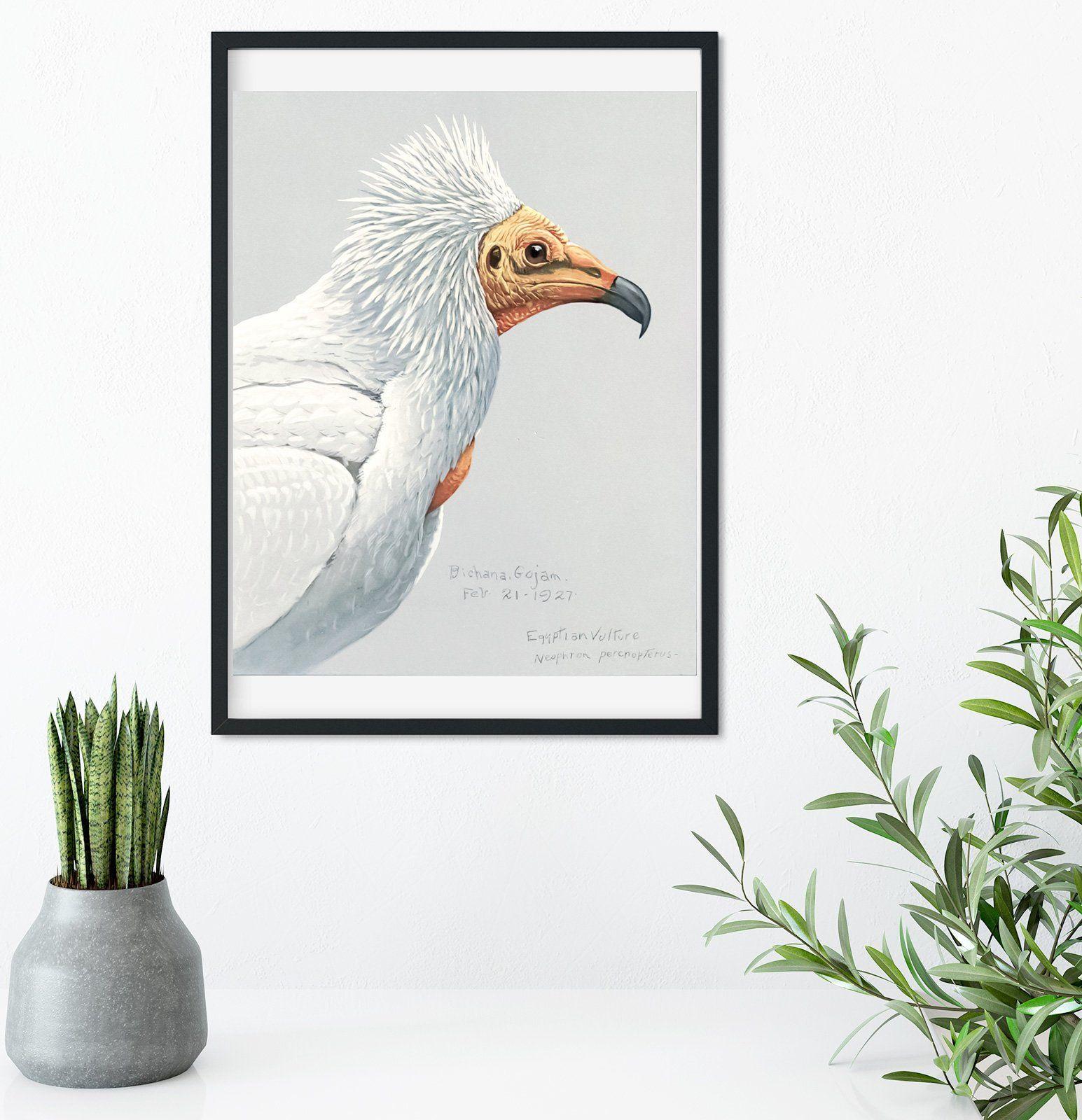 Framed vintage bird prints natural history bird art