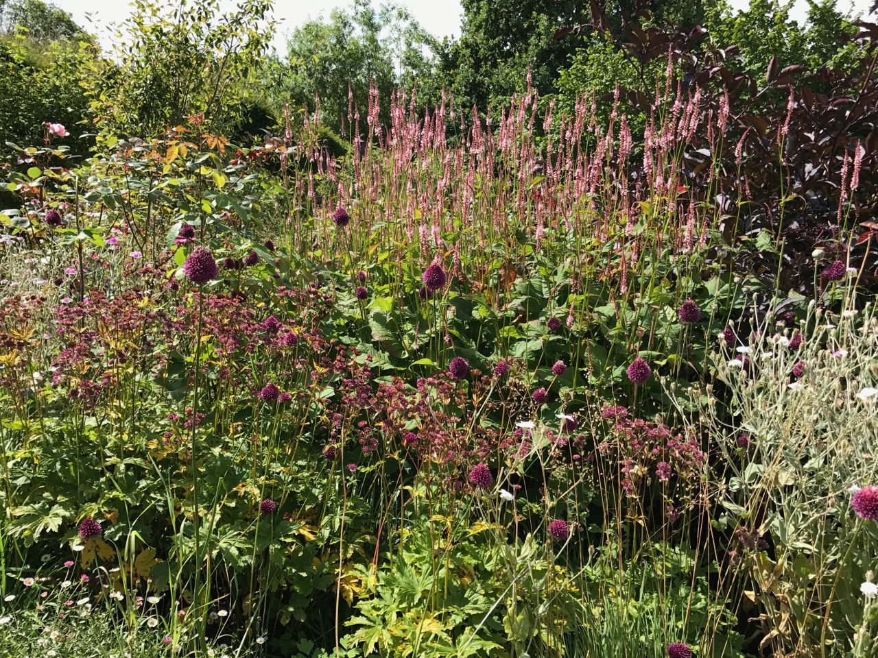 Prairie borders add depth and a sense of excitement to a garden ...