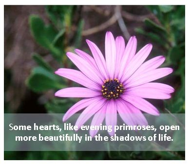 Some hearts, like evening primroses, open more beautifully, in the shadows of life.
