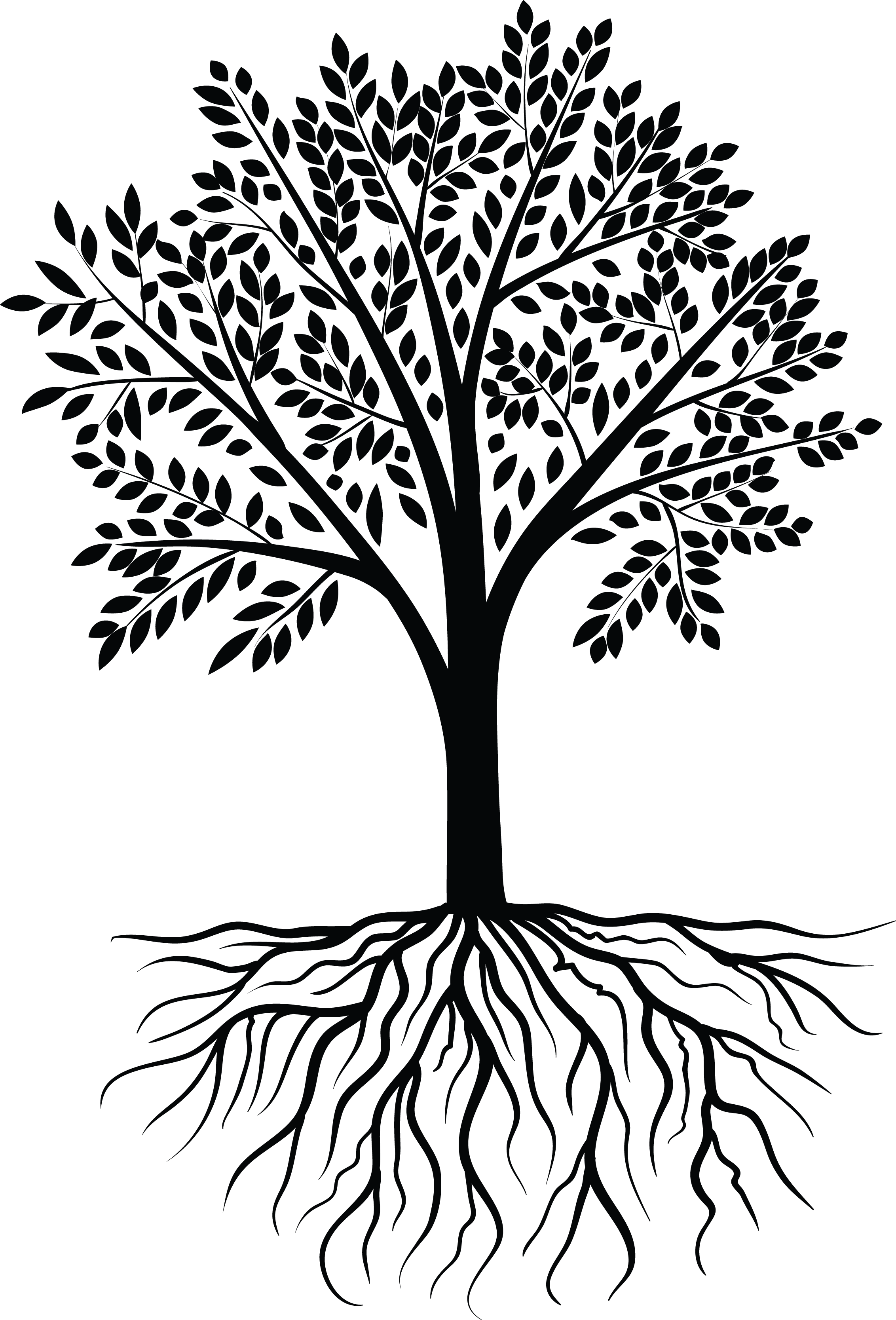 Tree Vector Black White Designs Hd Wallpapers Palm Tree Clip Art Tree Vector Png Palm Tree Vector