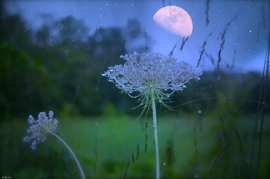 photos+of+meadows+in+moonlight | Moon Photograph - Meadow With Moonlight by Molly Dean