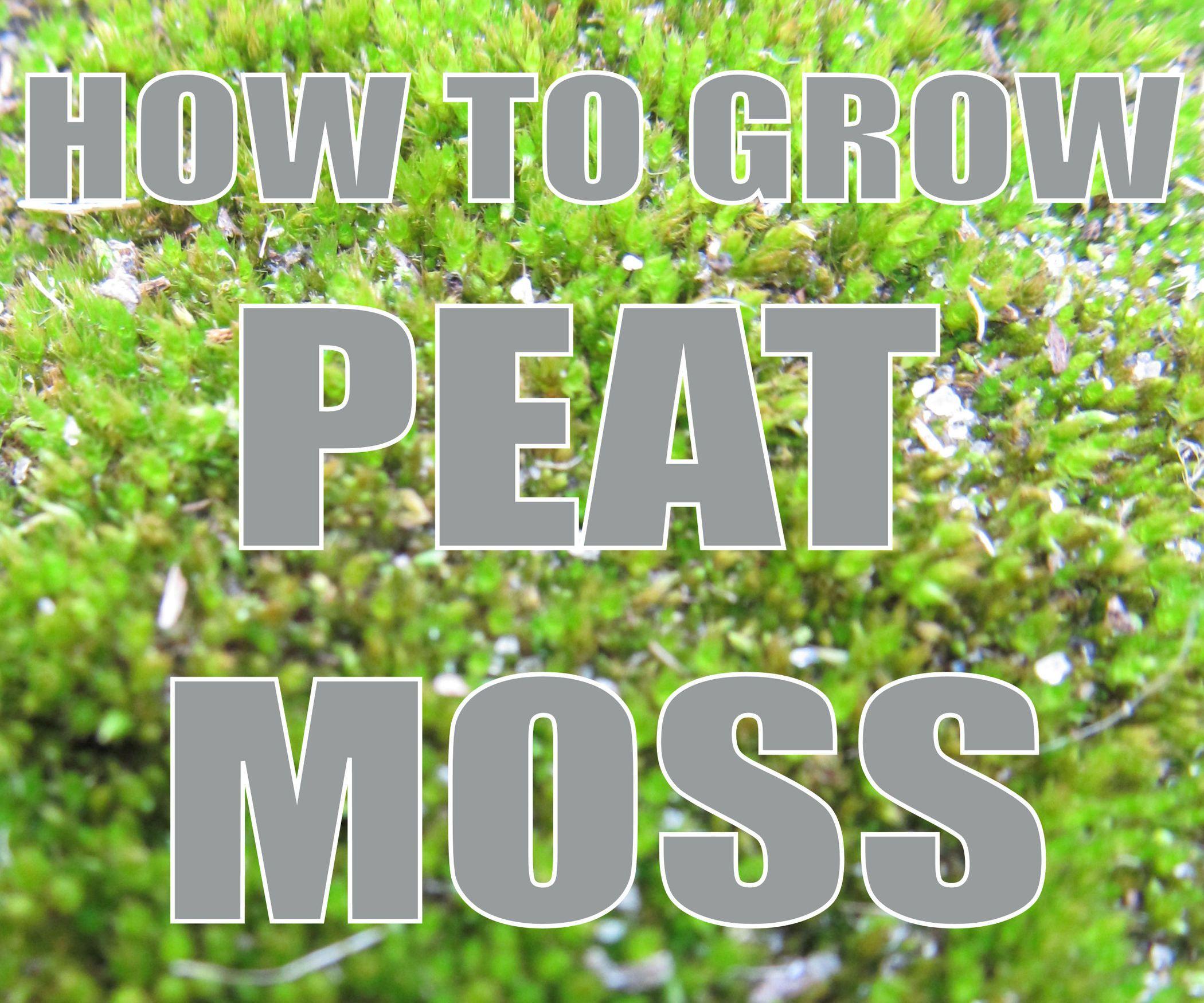 How To Grow Peat Moss Peat Moss Peat Moss