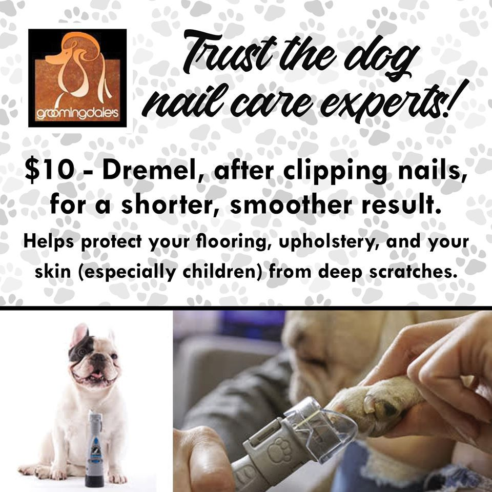 Trust The Dog Nail Care Experts Schedule An Appointment Today Nail Care Dog Nails Pet Grooming