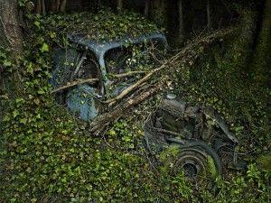 Paradise Parking: quando la natura si riprende il suo spazio