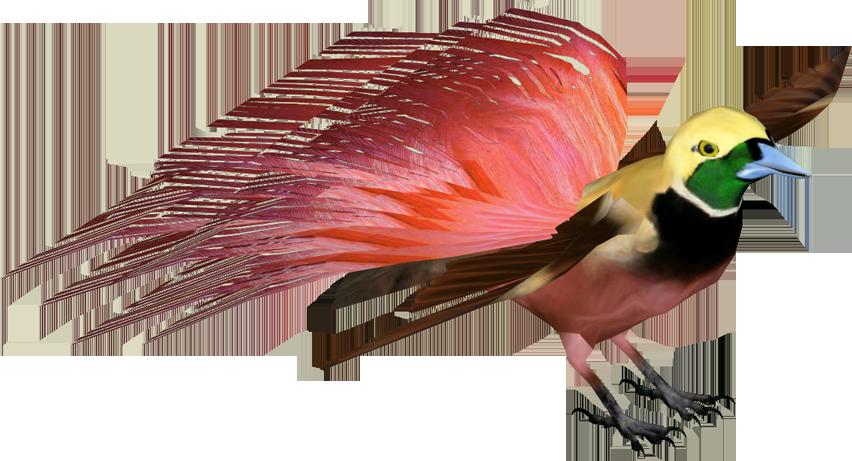 Raggiana Bird Of Paradise Birds Of Paradise Bird Paradise