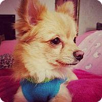 Adopt A Pet Jellybean Nashville Tn Pet Adoption Pets