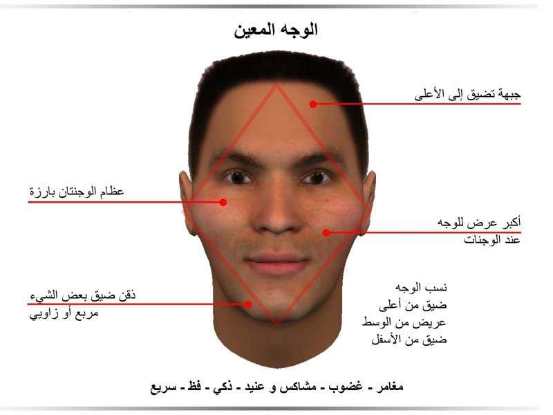 يمكن تمييز سمات الوجه المعين بالأتي جبهة تضيق الى الأعلى بدءا من الحواجب في الأسفل و إلى حد الشعر فى الأعلى الوجنات بار Face Reading Body Language Reading