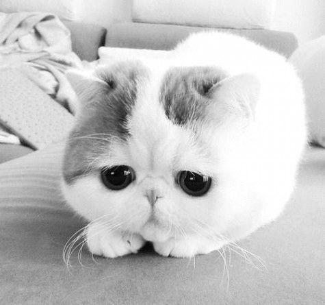 Awwwwwww 3 So Cute Gatos Bonitos Gato Exotico Gatitos Adorables