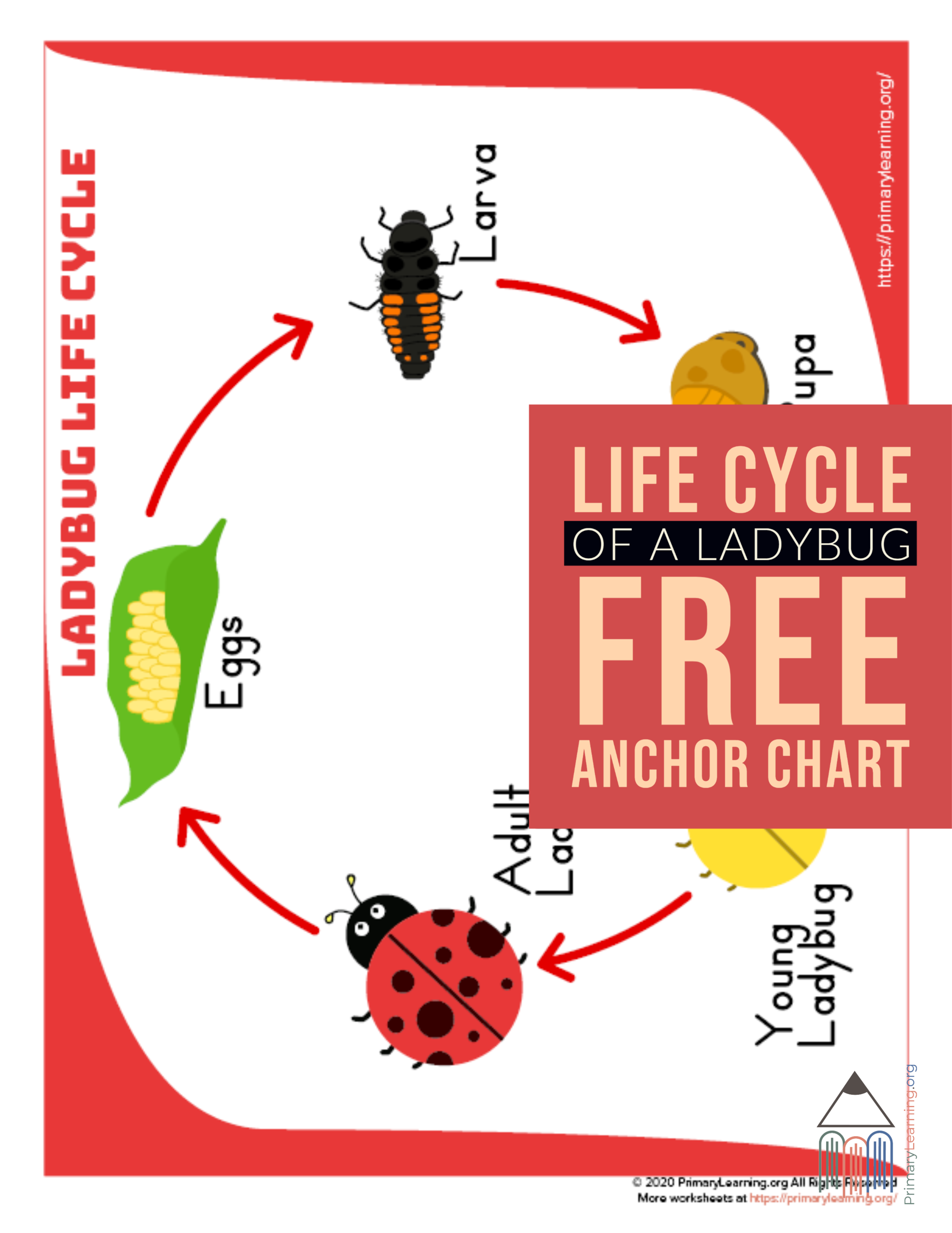 Ladybug Life Cycle Anchor Chart