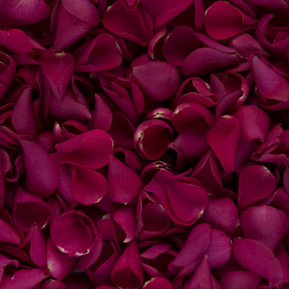 Rose Petals Rose Petals Hot Pink Roses And Dried Rose Petals