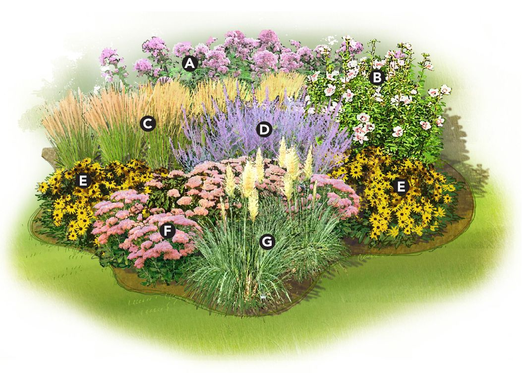 A) U0027Gatewayu0027 Joe Pye Weed (Eupatorium Maculatum), Zones 5