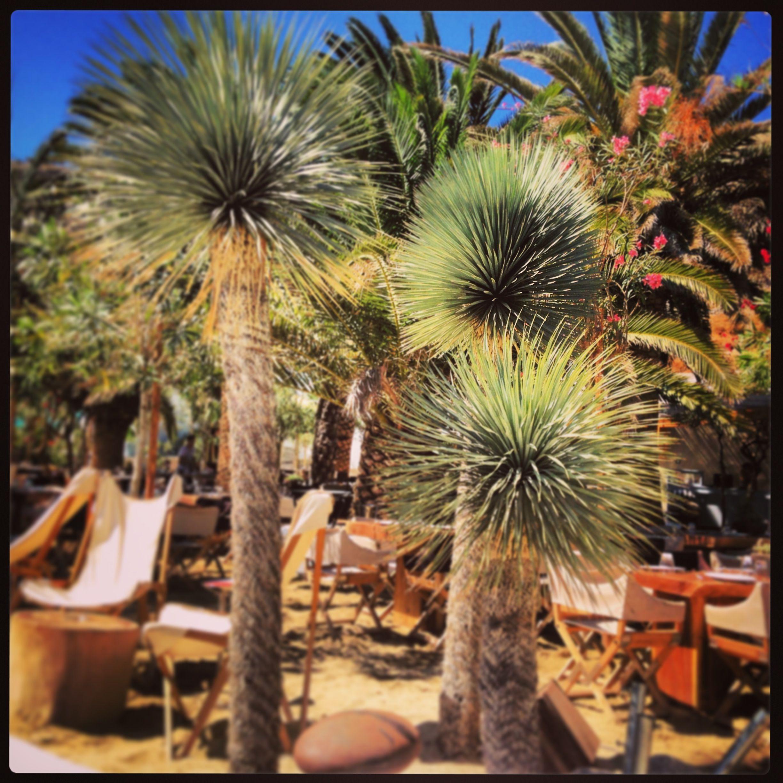 Mykonos tours amp travel bill amp coo hotel in mykonos greece - Nammos Beach Club Mykonos