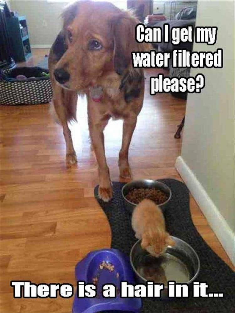 Funny Animal Pictures For Today Funnydogquotes