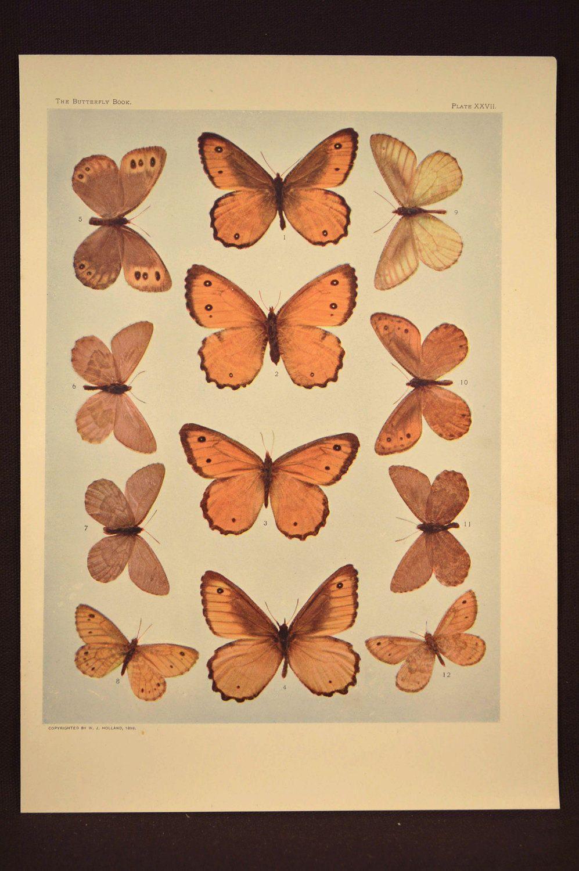 Butterfly Art Print Butterfly Wall Decor Butterflies | Nature / Home ...
