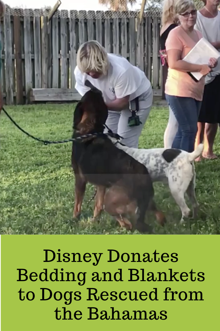Disney Donates Bedding and Blankets to Dogs Rescued from