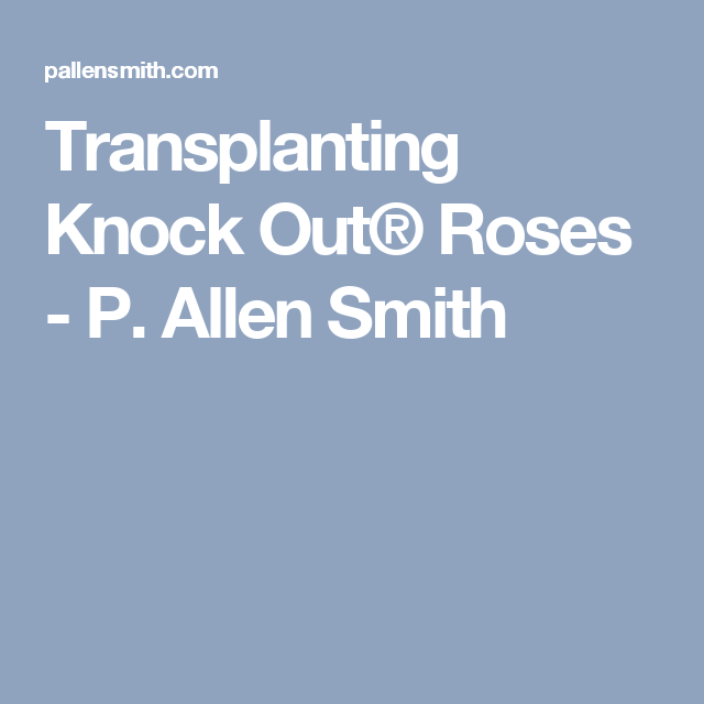 Transplanting Knock Out® Roses - P. Allen Smith