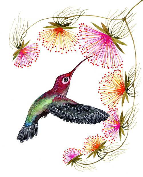 Singing hummingbird   Cosmética Natural   Pinterest   Colibri ...
