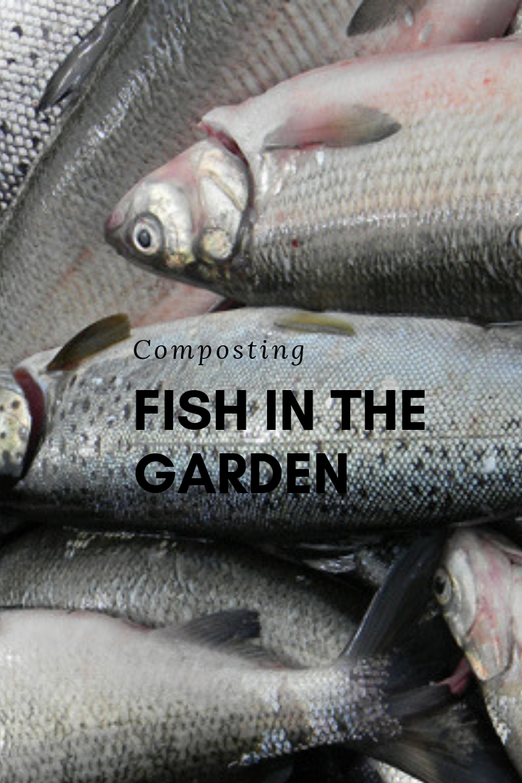 Composting Fish Right in the Garden Compost, Fish, How